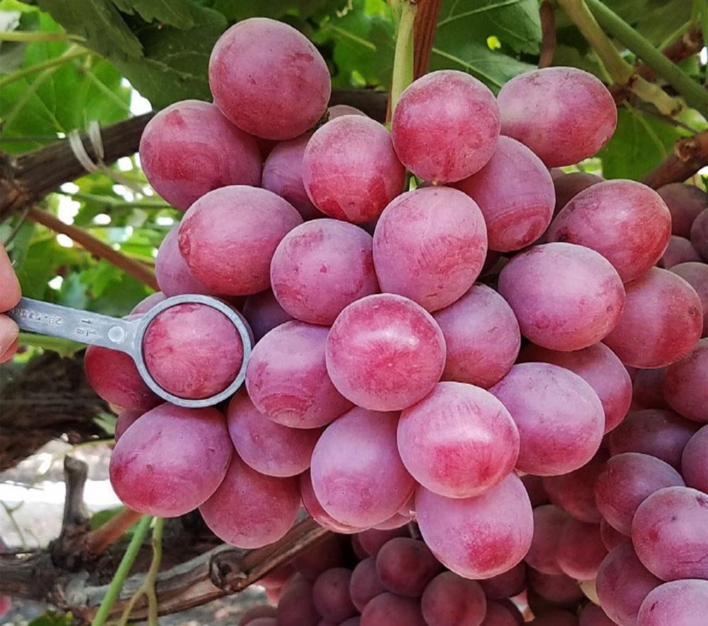 exporter of fresh fruits